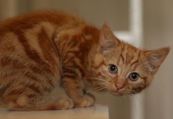 10 Videos adorables de gatitos siendo traviesos