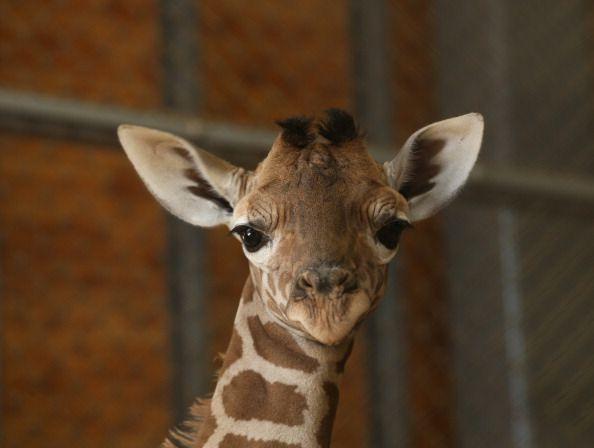 10 Hechos que no quieres saber sobre animales lindos