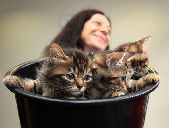10 De los mayores mitos sobre los gatitos