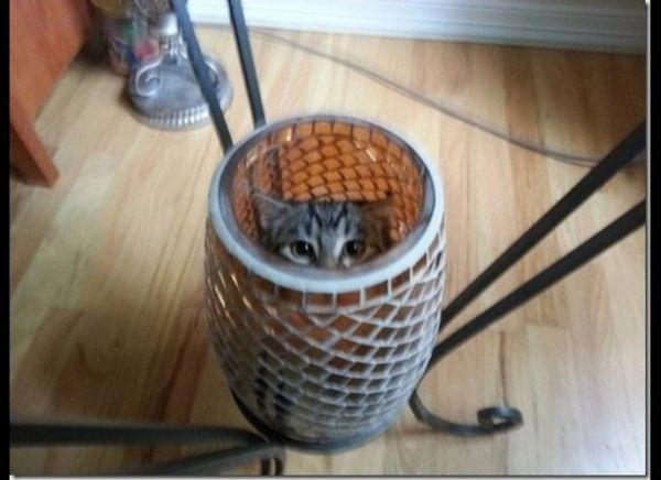10 De los lugares más escandalosos que los gatos esconden