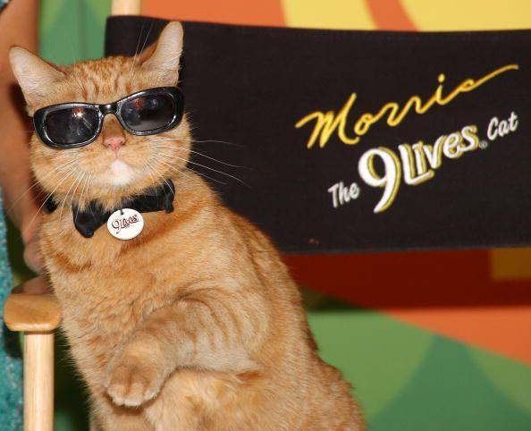 10 Gato de realidad muestra que necesitamos en la televisión ahora