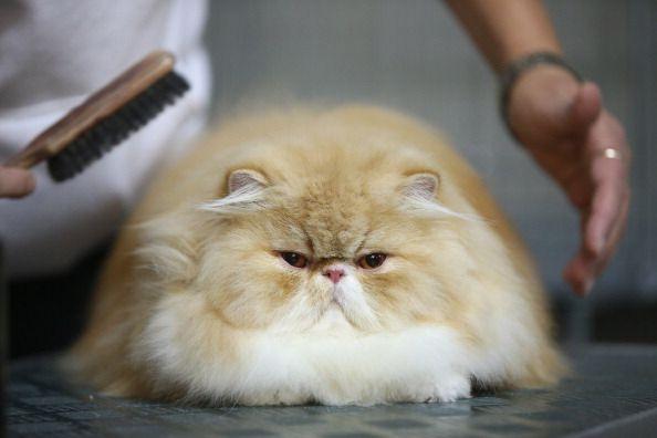 10 Formas en que ofendes a tu gato