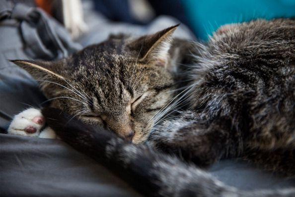 20 Imágenes adorables de gatos durmiendo en otros animales