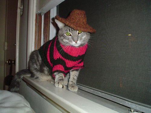 20 Gatos con adorables suéteres