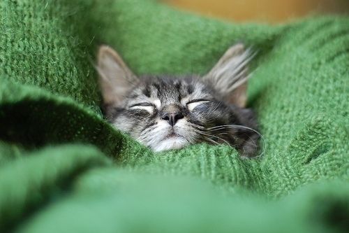 20 Gatitos que se ven adorables con suéteres en