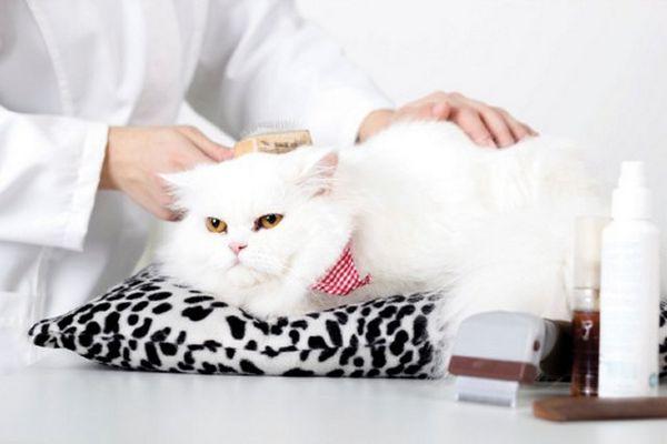 5 Consejos sobre cómo cepillar a un gato para que lo amen
