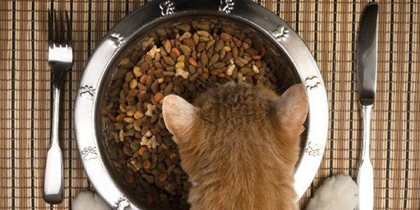 5 Consejos para ayudar a elegir el alimento adecuado para tu gato