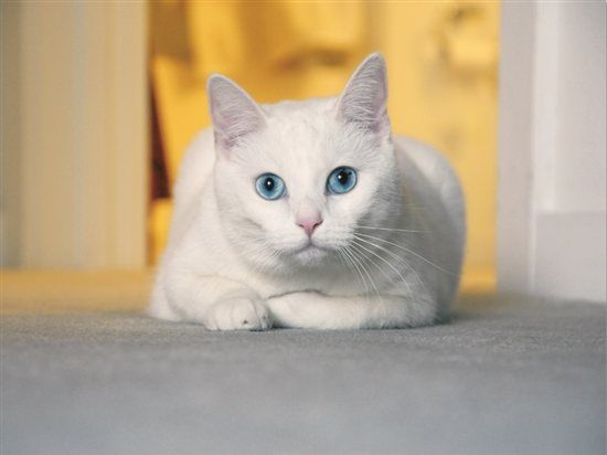 Un gato da a luz durante un incendio