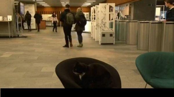 Un gato recibe su propia tarjeta de biblioteca universitaria