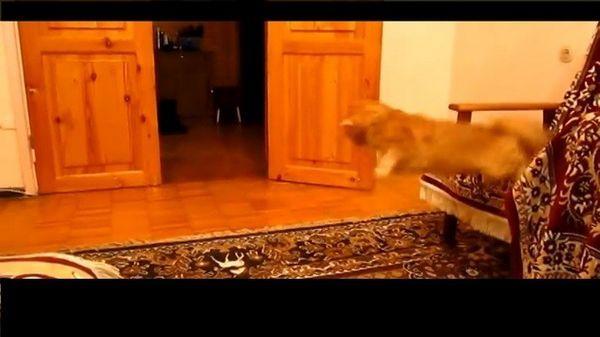Un gato que tiene miedo de los hermanos super mario Mario Salto de sonido