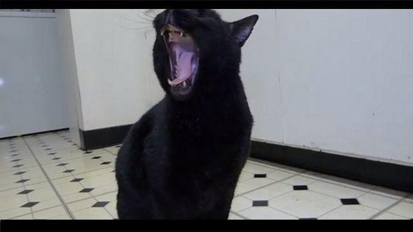 ¿Un gato que bosteza como Tarzán? Tienes que ver esto