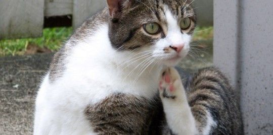 ¿Por qué-se-rasca-se-siente-bien-arañando-gato-644x320