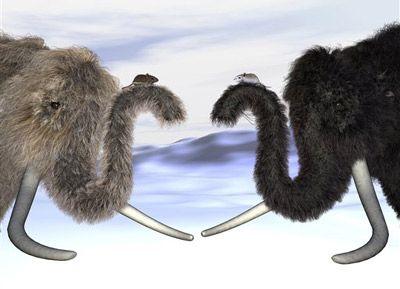 Los científicos descubrieron un gen en el mamut lanudo atribuido al color del cabello y ahora creen que los animales podrían haber venido en diferentes colores.