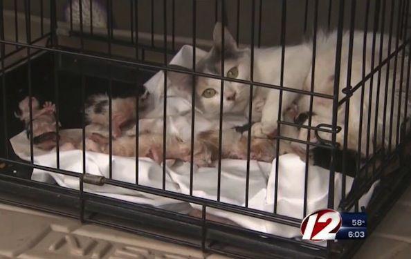 Gato rescatado de un edificio en llamas mientras entregaba a sus gatitos