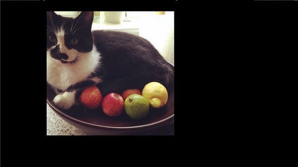 Los gatos demuestran que pueden meterse en cualquier cosa por una siesta