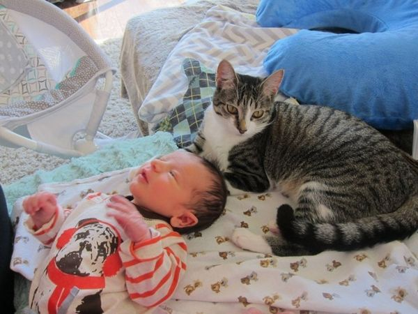 La pareja olvida contarle a su gato que tuvieron un bebé
