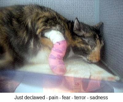 un gato que acaba de ser desgarrado mostrando dolor y mucha angustia