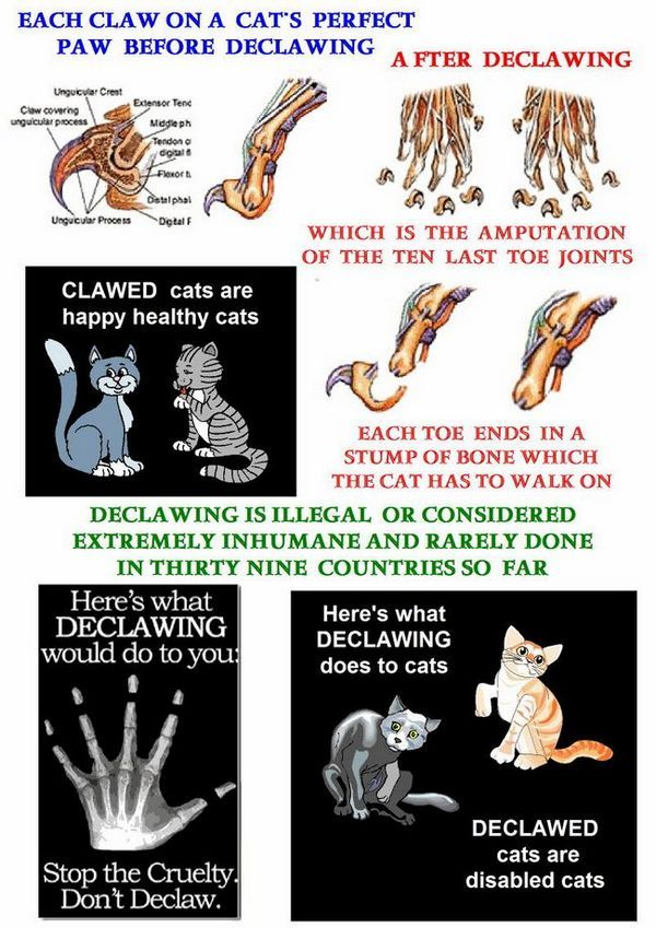 Cartel declawing