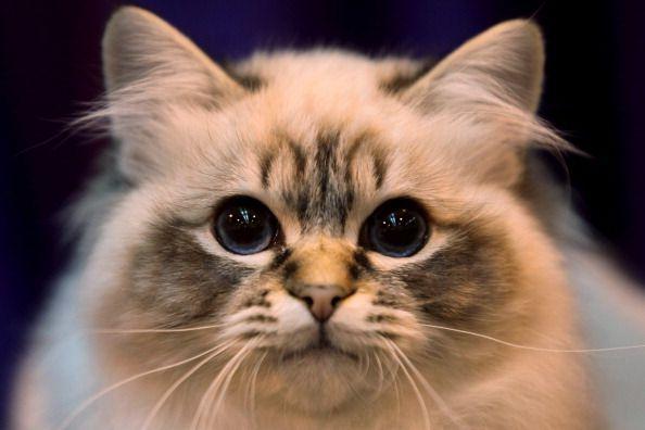 Qué hacer y qué no hacer para los gatos atrapados en los árboles