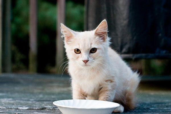 Fda advierte que un analgésico tópico es tóxico para los gatos