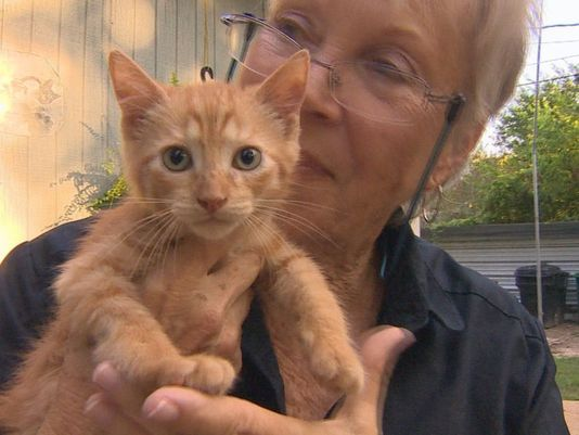 El rescate del gato salvaje consigue una mano que ayuda muy necesaria