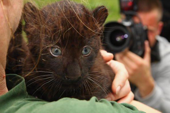 Cinco maneras en que los gatos realmente traen buena suerte en todo el mundo