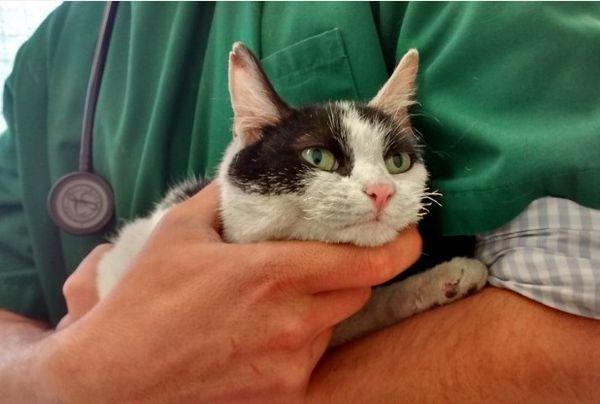 Habiendo sobrevivido durante una semana, se encontró un gato de tres patas en un apartamento dañado por el fuego