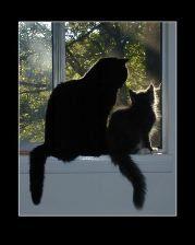 Fotografía de gato Helmi Flick - 2 de sus gatos