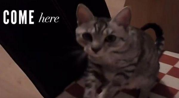 Video hilarante de gatos enfrentando a sus enemigos imaginarios