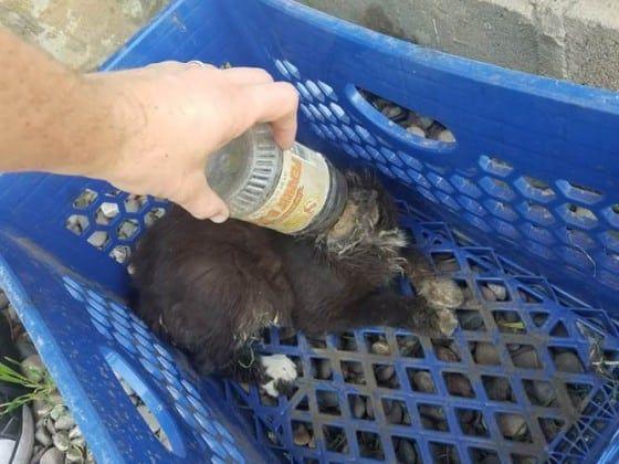 Servicios para Animales del Condado de Riverside
