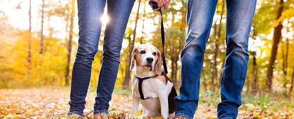 ¿Soy yo o el perro? las claves para salir con perros