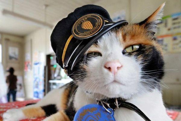 La estación de tren japonesa reemplaza al muy querido gato maestro de estación
