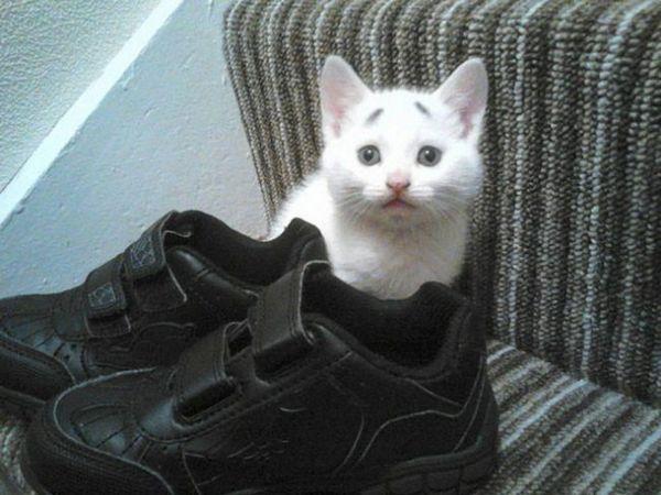 Kitten nace con cejas que siempre se ven preocupadas