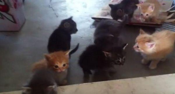 Los gatitos encuentran una puerta por primera vez y no tienen idea de qué pensar