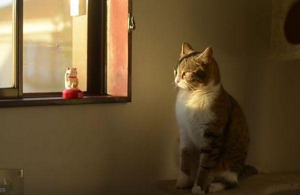 Kitty imitando a un gato que hace señas es demasiado lindo