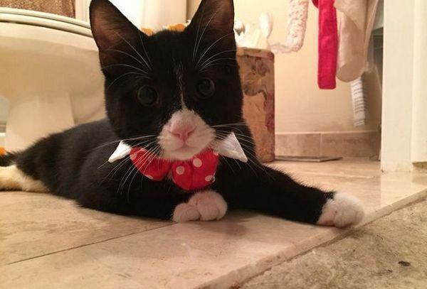 Kitty llamado turbo two legs tiene un nuevo hogar después de una terrible lesión