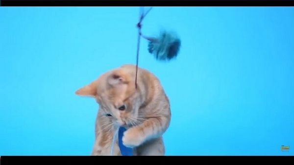 ¡Haz una varita de plumas diy que tu gato adorará!