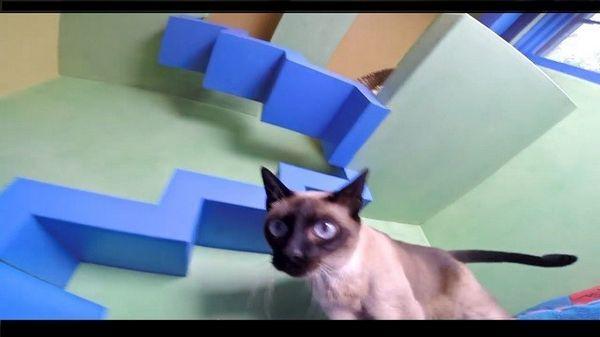 El hombre rescata a quince gatos y convierte su hogar en una utopía de gatos