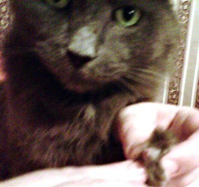 Misty muestra su úlcera en la pata