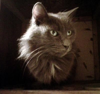 Misty vive en un armario de la cocina
