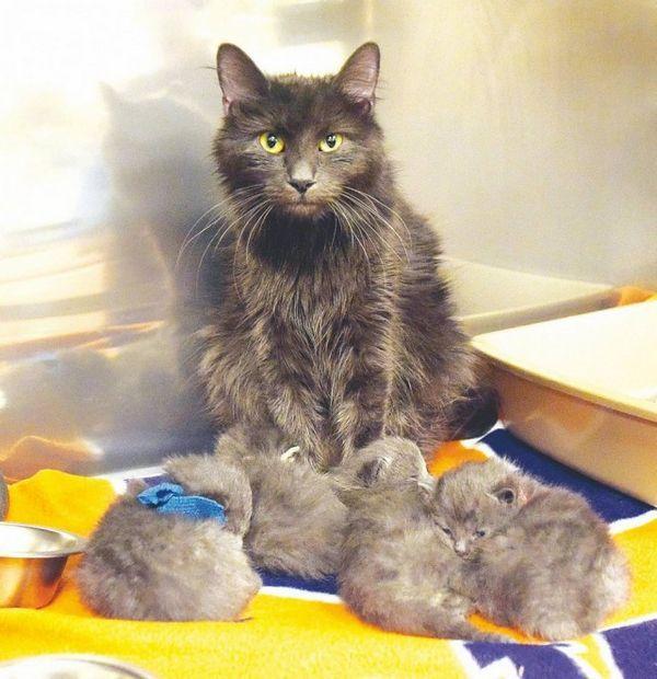 Mamá gato se reúne con sus gatitos después de un incendio en la casa