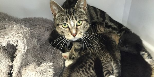 Madre gato entra en la clínica veterinaria para reunirse con sus gatitos que fueron arrojados allí