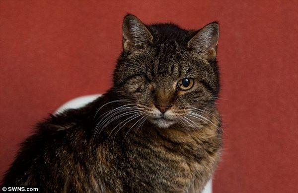 Un gato de ojos ha corrido más de 25 veces, pero a los 27 años, ¿es ella la más antigua?
