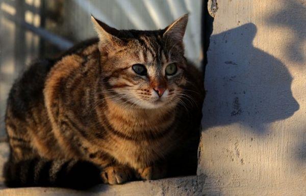 Mascota gato salva propietario de la quema de la casa en la ciudad rusa de ufa