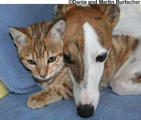 gato y perro de bengala