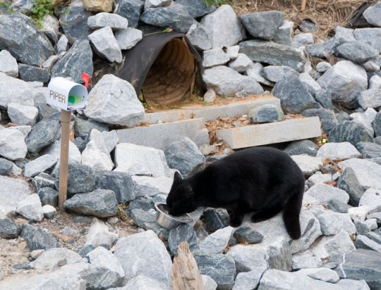 Piper el gato vive en una tubería, pero recibe cartas de admiradores en un mini buzón