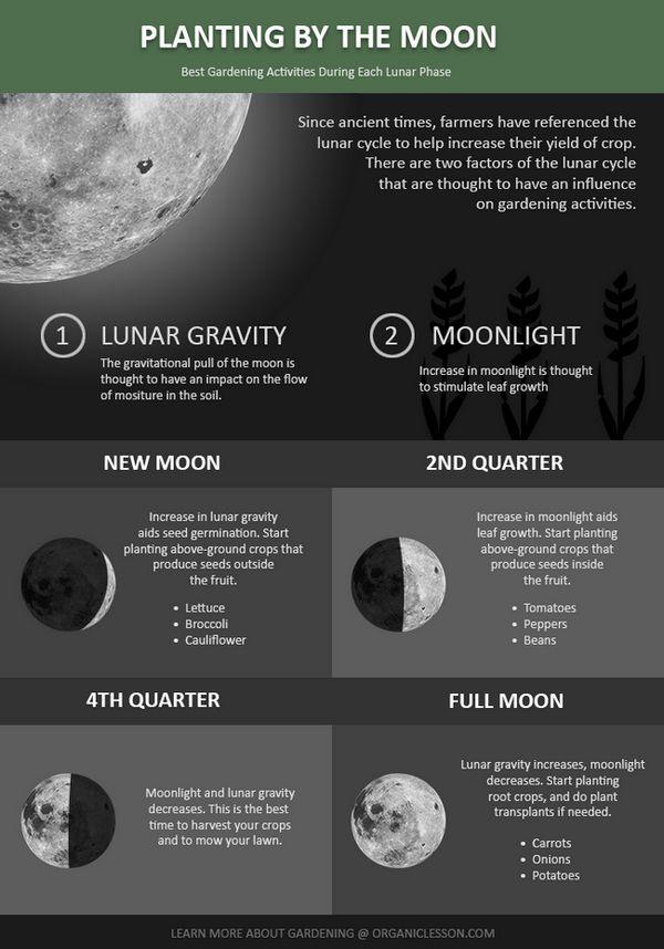 Plantar por la luna - la guía de inicio