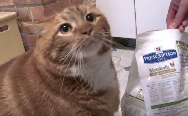 El flaco y gordo gato consigue una nueva vida gracias a este increíble veterinario