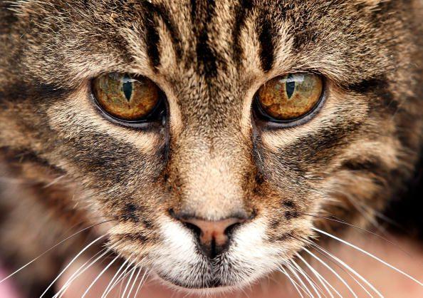 Diez trabajos a los gatos les va mejor que a los humanos