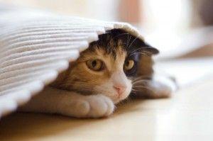 Los 10 lugares más comunes a los gatos les gusta esconderse